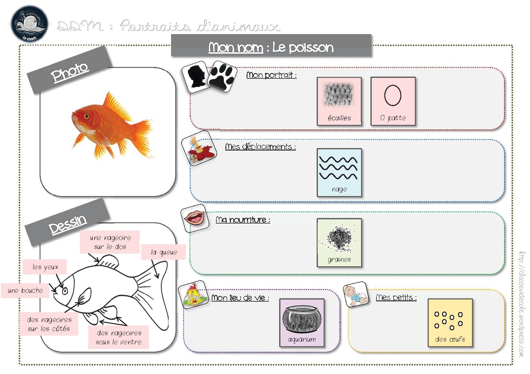 D couverte du monde le vivant - Le petit poisson rouge maternelle ...